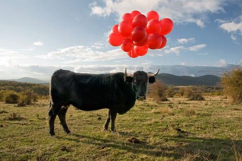 Cow by SpY
